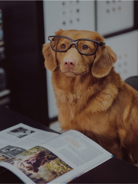 Photo of a cute dog wearing eyeglass frames and sitting at a desk
