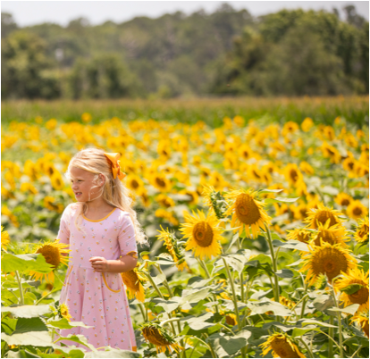 Chlid in a pink dress in a sunflower field