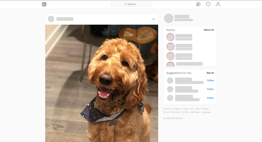 Webpage screenshot example of gatsby blank page structure brown dog in instagram type photo format